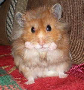 The Pondering Hamster:  Why oh why oh why